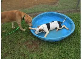 Kauai Pup Agent..,,
