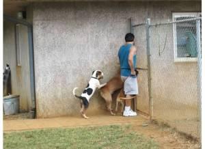 Kauai Pup Agent...