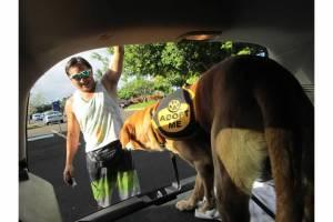 Nov 1 2012 Taking Pup Kauai on 1st field trip from Kauai Humane Society at Kalapaki Beach (2)