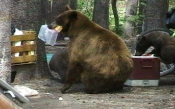 bear whisperer.
