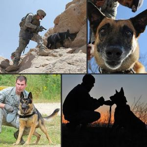 war dogs patrol training