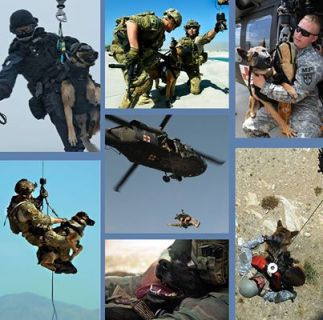 war dogs specialized training hoist