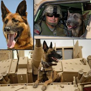 war dogs vehicle patrol
