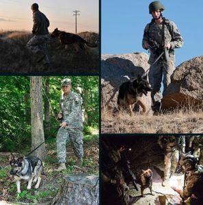 war dogs walking patrol open area search