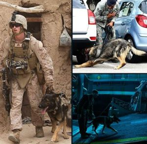war dogs walking patrol