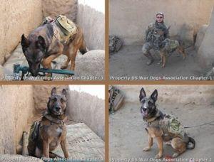 war dogs...