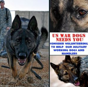 ward dogs volunteers needed