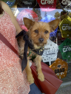 2014 May 29 Copper's Dream Event PetFoodDepot Redwood City, CA (28)