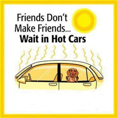hot cars and dogs