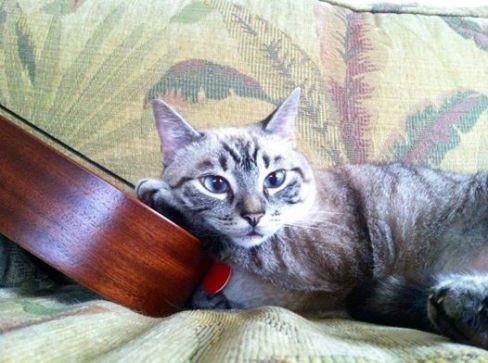lost kauai kitty