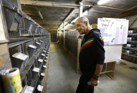Hollywood mogul and co-creator of The Simpsons, Sam Simon, looks at cages at a chinchilla farm after he financed the purchase of the facility by PETA in Vista