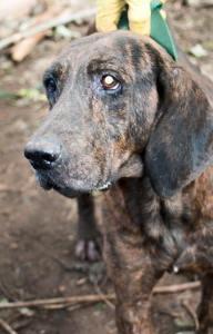 Ally Hamada Huntng Dogs (12)