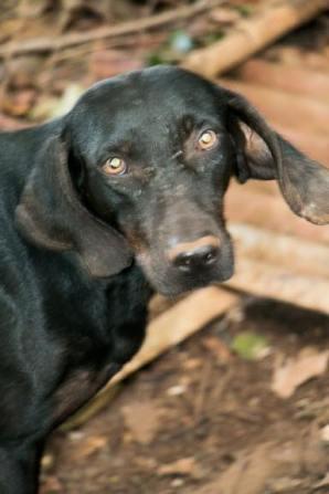 Ally Hamada Huntng Dogs (4)