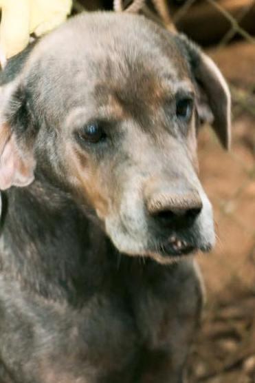 Ally Hamada Huntng Dogs (5)