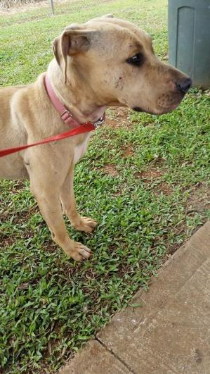 KHS Sarah Sweet Sarah has seen some rough days Shes still skinny so we just walked a bit  1 30 15 D M RClub(9)